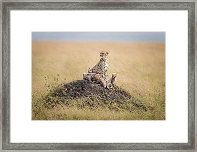 Regal Protector Framed Print by Ted Taylor