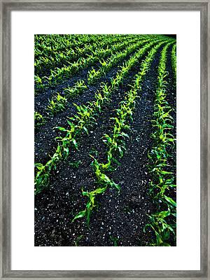 Regimented Corn Framed Print by Meirion Matthias