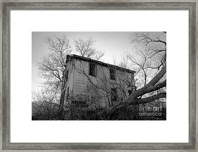 Regrowth Framed Print by Amanda Barcon