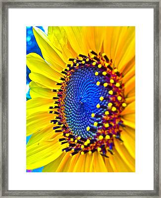 Rejoice Framed Print by Gwyn Newcombe