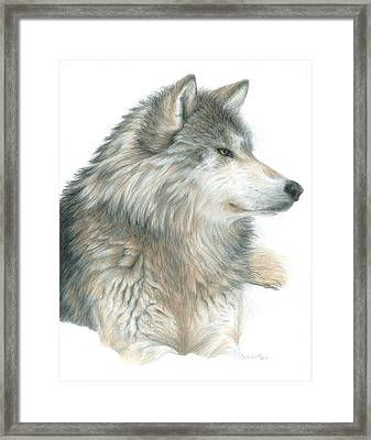 Relaxing Wolf Framed Print by Carla Kurt