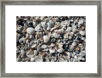 Remnants Framed Print by Terri Winkler