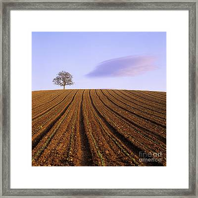 Remote Tree In A Ploughed Field Framed Print by Bernard Jaubert
