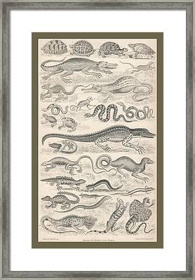 Reptiles Framed Print by Captn Brown