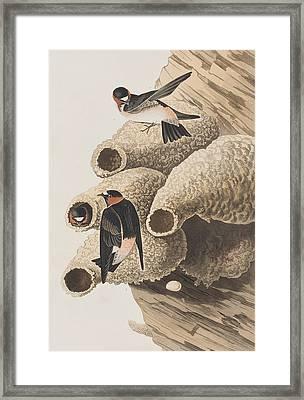 Republican Or Cliff Swallow Framed Print by John James Audubon