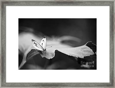 Resting Framed Print by Gabriela Insuratelu