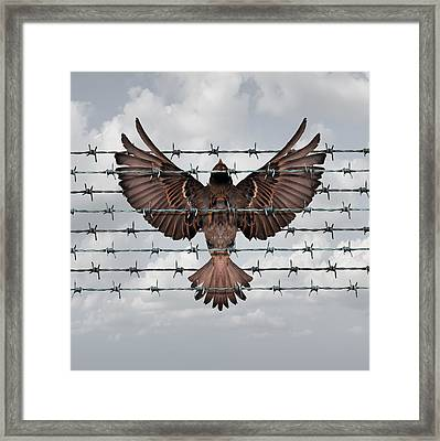 Restricted Freedom Framed Print by Dumitru Pogolsa