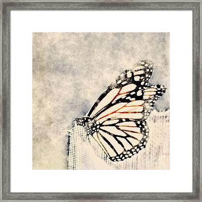 Reve De Papillon - 11a Framed Print by Variance Collections