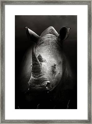 Rhinoceros Portrait Framed Print by Johan Swanepoel