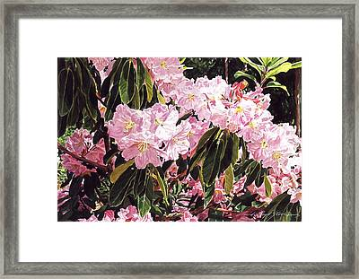 Rhodo Grove Framed Print by David Lloyd Glover