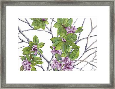 Rhododendron Framed Print by Autumn Leaves