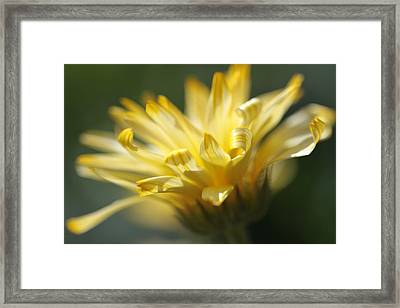 Ribbons Framed Print by Connie Handscomb