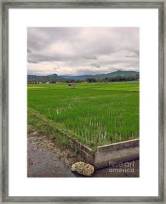 Rice Paddy In The Philippines Framed Print by Kay Novy