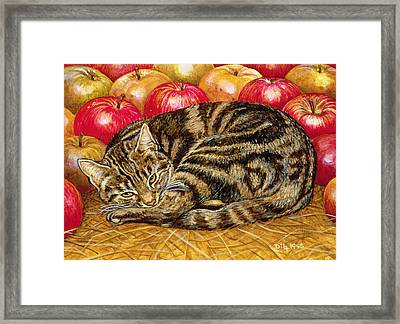 Right Hand Apple Cat Framed Print by Ditz