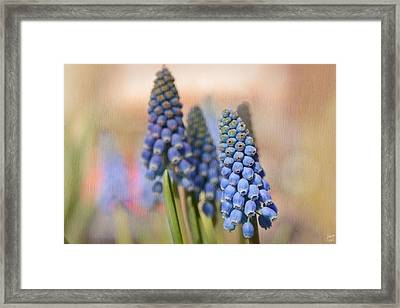 Ringing In Spring Framed Print by Lisa Knechtel