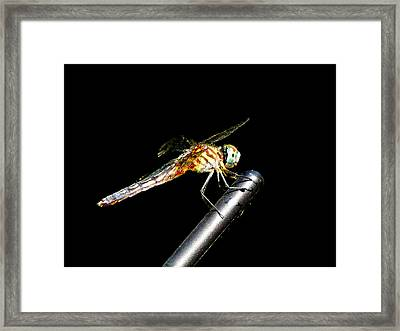 Rites Of Spring Framed Print by Mike Greco