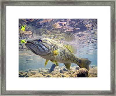 River Smallmouth Framed Print by Ron Kruger