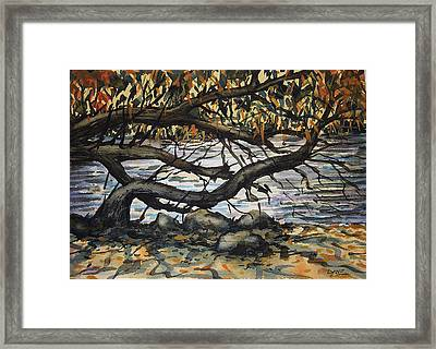 River Willow 2 Framed Print by Lynne Haines