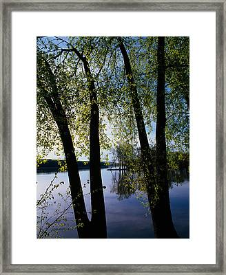 Riverview Through Budding Trees Framed Print by Panoramic Images