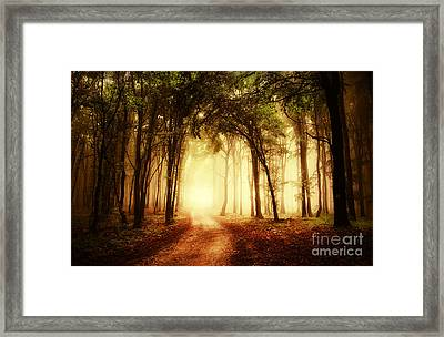Road Through A Golden Forest At Autumn Framed Print by Caio Caldas