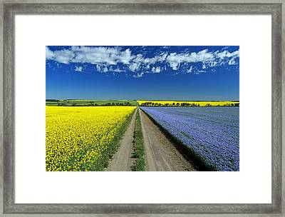 Road Through Flowering Flax And Canola Framed Print by Dave Reede