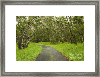 Road Through Koa Tree Forest Framed Print by Charmian Vistaunet