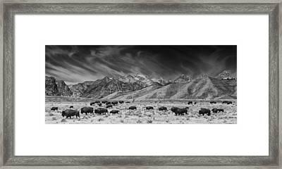 Roaming Bison In Black And White Framed Print by Mark Kiver