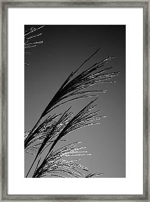 Robinwood Grasses Framed Print by Kristen Vota