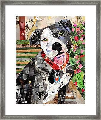 Rocco Framed Print by Paula Dickerhoff