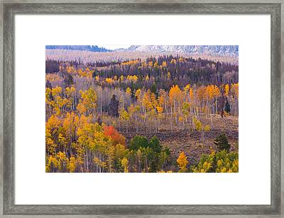 Rocky Mountain Autumn View Framed Print by James BO  Insogna