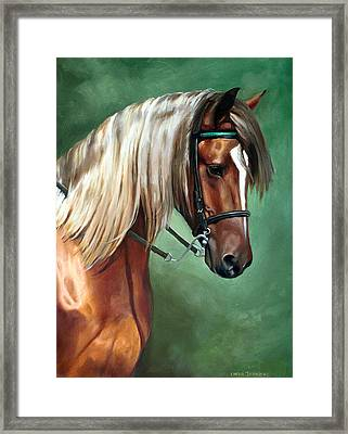 Rocky Mountain Horse Framed Print by Linda Tenukas