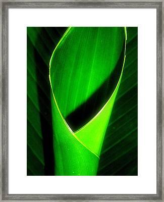 Rolled Canna Leaf Framed Print by Beth Akerman
