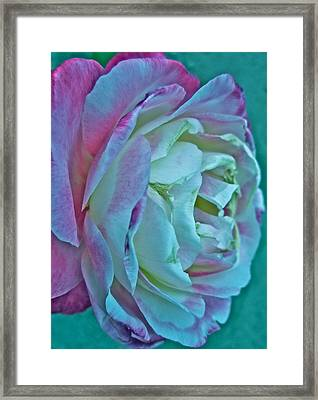 Romancing The Restless Framed Print by Gwyn Newcombe