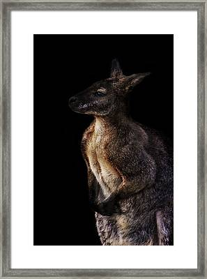 Roo Framed Print by Martin Newman