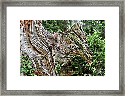 Roots - Welcome To Olympic National Park Wa Usa Framed Print by Christine Till