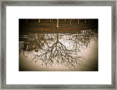 Roots Framed Print by Derek Selander