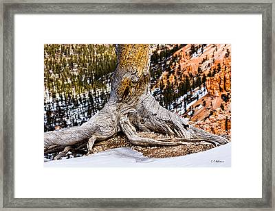 Roots Gripping The Edge Framed Print by Christopher Holmes