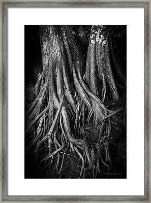 Roots Framed Print by Marvin Spates