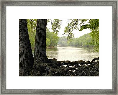 Roots On The Mississippi Framed Print by Jim Hughes