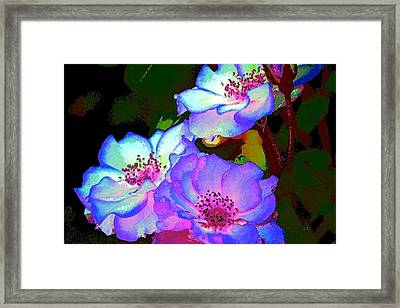 Rose 127 Framed Print by Pamela Cooper