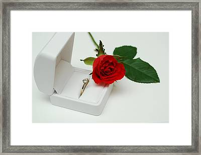 Rose And Diamond Ring Framed Print by Terence Davis