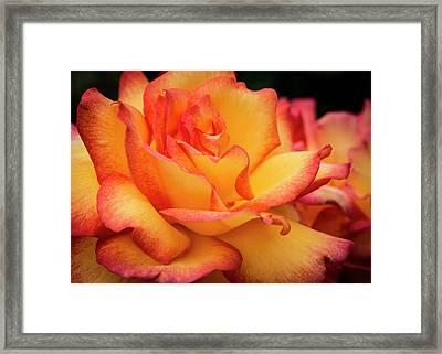 Rose Beauty Framed Print by Jean Noren
