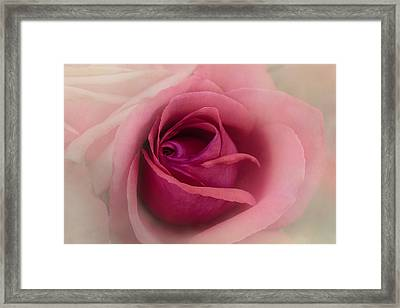 Rose Blush Framed Print by Terry Davis