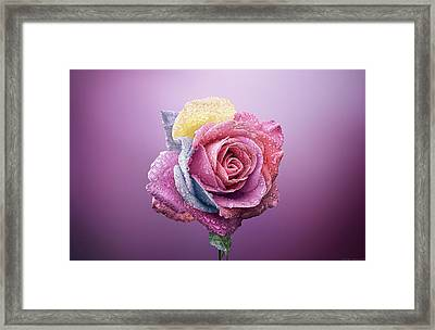 Rose Colorfull Framed Print by Bess Hamiti