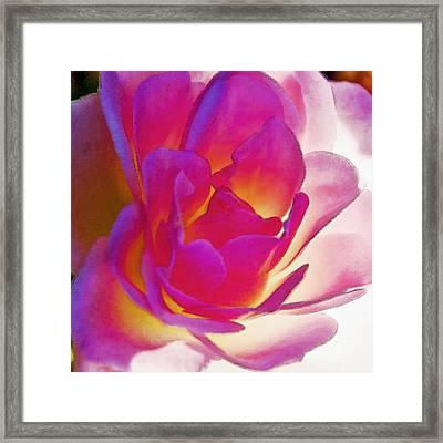 Rose Effusive Framed Print by Lynne Furrer