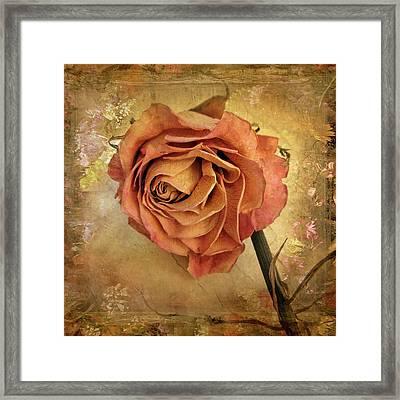 Rose  Framed Print by Jessica Jenney