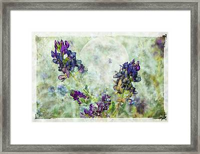 Rose Knows Framed Print by Ed Hall