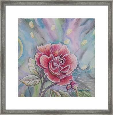 Rose Framed Print by Laura Laughren