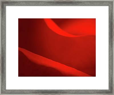 Rose Macro Framed Print by Wim Lanclus