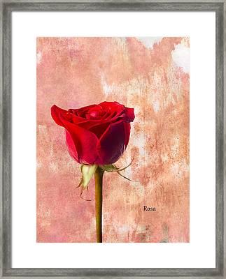 Rose Framed Print by Mark Rogan